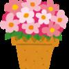 幸せなひと時。花瓶に飾る綺麗な花