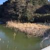 『水神池』静岡県掛川野池群バス釣り完全攻略マップ