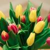 シューマン:交響曲第1番「春」【特徴ある名盤】春を迎えるよろこび!