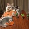 【今年の加湿はネコにおまかせ】ニトリのネコ型ペーパー加湿器がたまらなくかわいい!