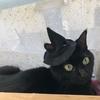 黒猫ベルの久しぶりの病院。猫喘息⁈ そして今ころハロウィンでごめんなさいf^_^;