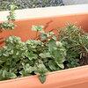 夏は特におすすめ!虫除け効果も期待できるハーブ(オレガノ・ ローズマリー)の寄せ植えアイデア