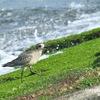 海辺の鳥たち