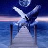 地球で重大な役割のあるイルカとクジラ