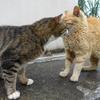 6月後半の #ねこ #cat #猫 その3