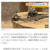 【雑感】暑すぎてカブトムシ3000匹以上が衰弱死 兵庫の観察施設急きょ閉園へ