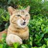 6月前半の #ねこ #cat #猫 その1