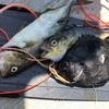 合同魚突きと鹿児島と三宅島遠征