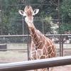 野毛山動物園でふれあい体験!デートにもぴったりな無料の動物園を地元民が紹介します。