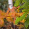 木の葉の彩り