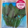 プランター栽培 サラダほうれん草を育ててみる