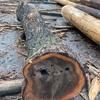 国産胡桃の原木から製材品