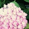梅雨だから紫陽花、、、ではなく敢えてキノコを紹介してみる