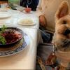 【愛犬とランチ】ジョイア・ミーア那須本店