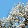 花の寺癒やされる庭園光則寺!カイドウで有名な光則寺でご朱印