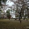 4月・奈良公園・鹿・桜