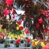神代植物公園 ベゴニア室