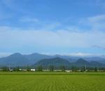 集中豪雨で野菜が高騰!宮城の米は大丈夫!?野菜が高い原因と対処方法