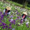 過去の写真セレクション(夏の花)