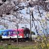 4/7 桜×菜の花×鈴鹿線の虹