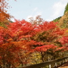 大芦渓谷大滝の紅葉はすでにピークを過ぎていました。