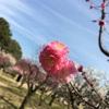 アラフォーは春を先取りすぎてはいけない
