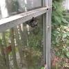 掛川市で温室にできた蜂の巣を駆除してきました