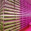 大規模植物工場のみらい社が倒産。課題は販路確保?!