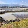 飯泉の池(神奈川県小田原)