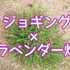 ジョギングでラベンダー畑を詣でる│季節の花ランニング