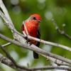 自宅敷地の野鳥たち(中米ベリーズにて)