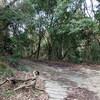 平野谷から二本松林道のはずが、途中撤退