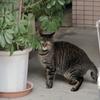 11月20日 墨田区八広から柳原の猫さま とその情景