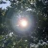 温かな陽光(大きくて深い男性性の愛)