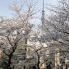 隅田川沿いの桜を見てきました(桜橋~言問橋)