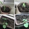 ガーデニング:植物の生長を目にすると、心が癒される!!