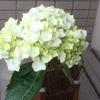 6月1日は、幸せの逆さ紫陽花