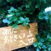 南沢あじさい山に行ってきました
