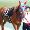 私が競馬にハマった理由②~アンデスクイーンという馬を知る~