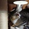 4-53   グレコ家猫日記〜肉ではなく魚が好みです〜