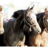 我が家の2歳馬が続々と入厩! 来年こそ念願のクラシック出走を!