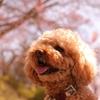 カスタムメイドで愛犬の健康をサポート