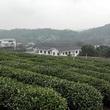【杭州観光】中国茶葉博物館で中国茶の文化に触れる【おすすめスポット】