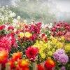 40代女性のストレス解消!カラフルなお花を飾ろう