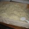 麹作り(1)