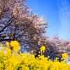 この春に撮りたい被写体をまとめてみたお話