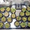 室内で越冬させている植物の管理方法的なこと