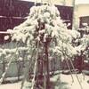 春の雪に萎える、コンクールで歯磨き。