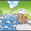 【犬漫画】吉野川上流で川遊び1