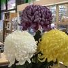 再び菊花展の話~花はパワーをくれる